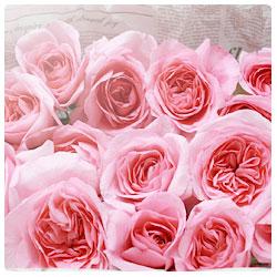 食用ピンクのバラ